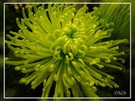 Tonos verdes by adtemexi