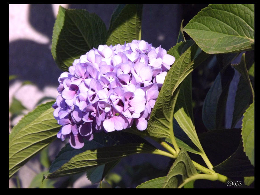 Flor de mundo by adtemexi