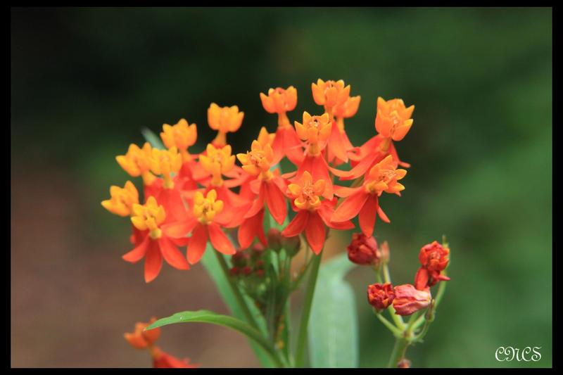 En naranja by adtemexi