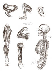 (More) Male Anatomy by TabathaZee