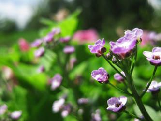 Flowering World