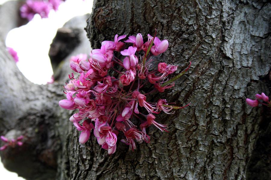 Tree of life by Friulana
