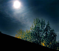 moonlit treetops by paranoos