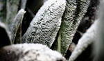 Cold morning frost