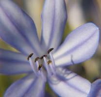 Purple Flower by somethingunuasul