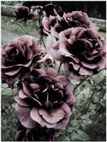 Rosey by ryano292