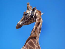 Giraffe by ryano292