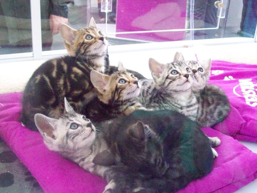 cats by ryano292