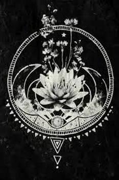 Lotus In The Dark