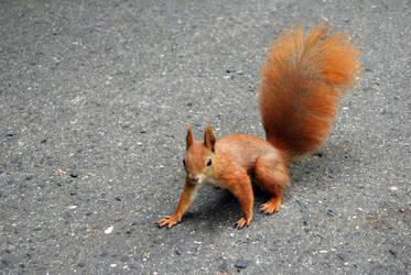 2010-10-05 Squirrel 01