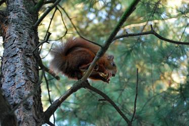 2010-10-05 Squirrel 03