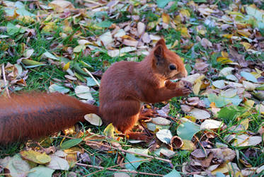 2010-10-05 Squirrel 04