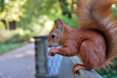 2010-10-05 Squirrel 05