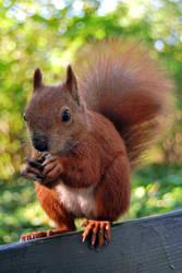 2010-10-05 Squirrel 06