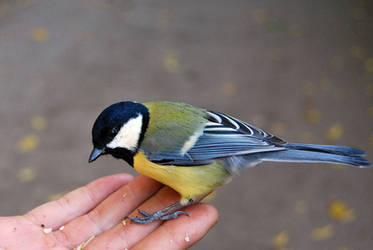 2010-10-05 Bird