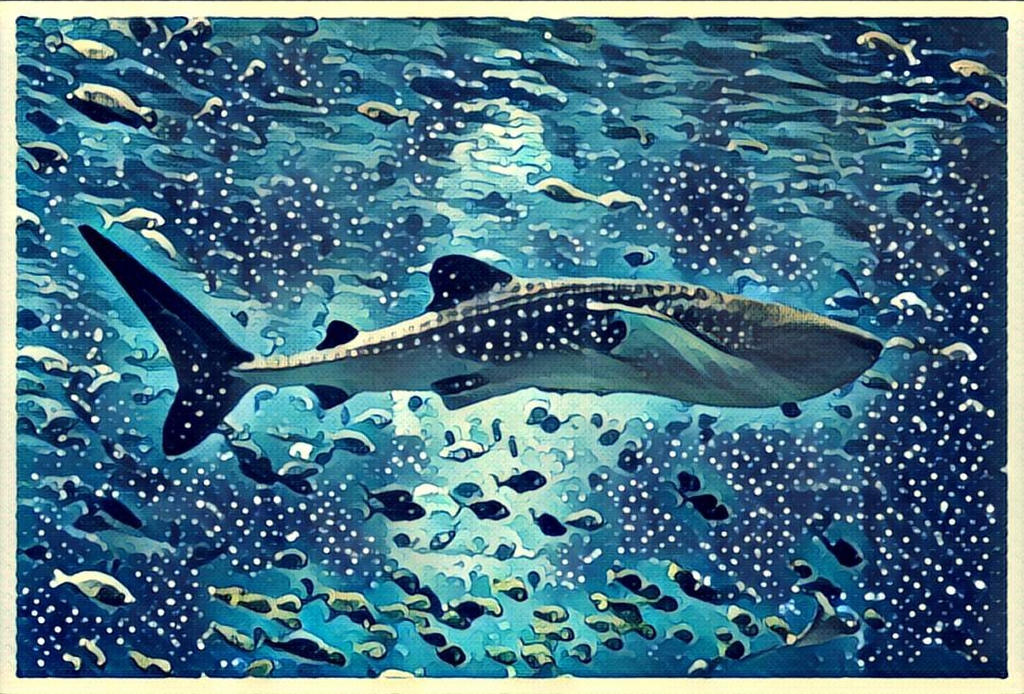 Whale Shark by thesuper