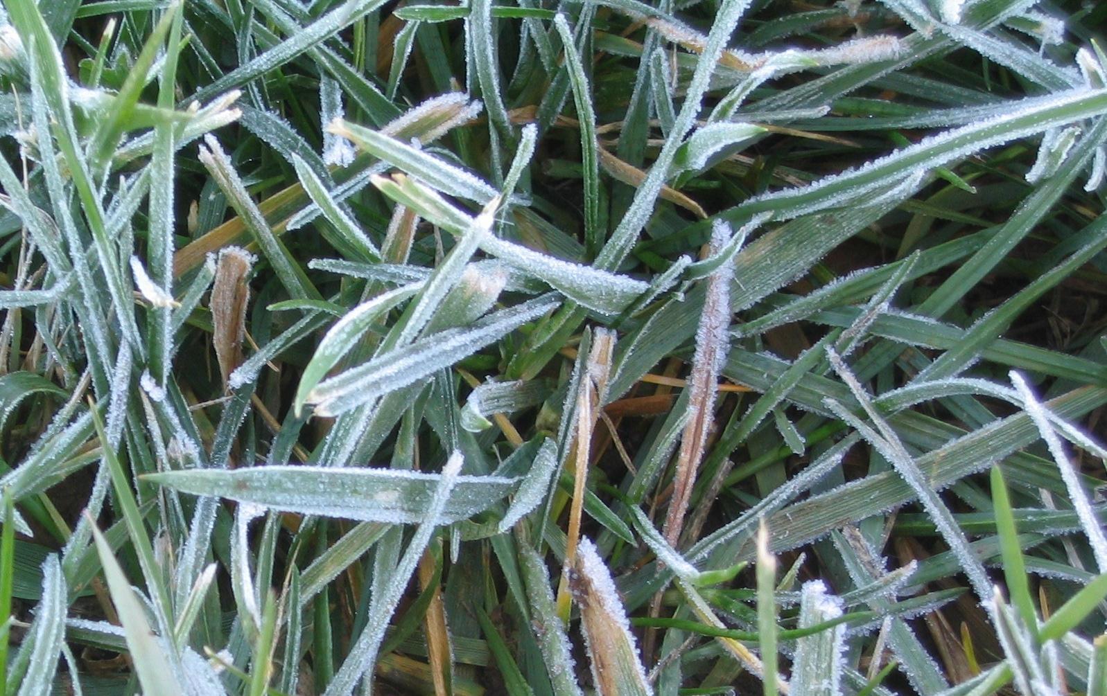 Frost on Grass by CrimsonDragoon on deviantART