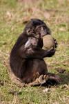 4890 - Macaque