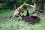 3850 - Jaguars