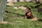 7357 - Baby Orangutan