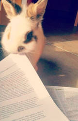 studying with Pako* by Kibho