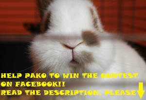 Help Pako to win the contest!!