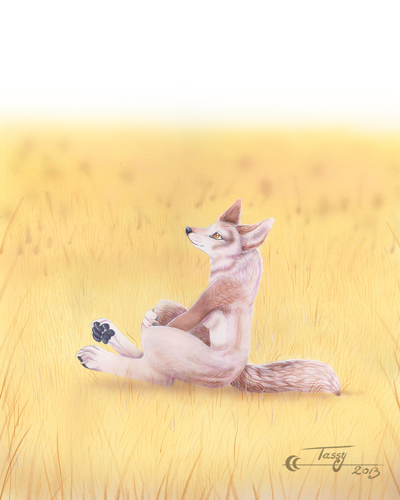 Little Coyote by Tassy