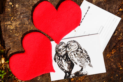 Love and owls