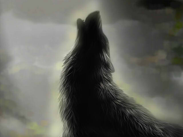 Wolf by TheliaZein