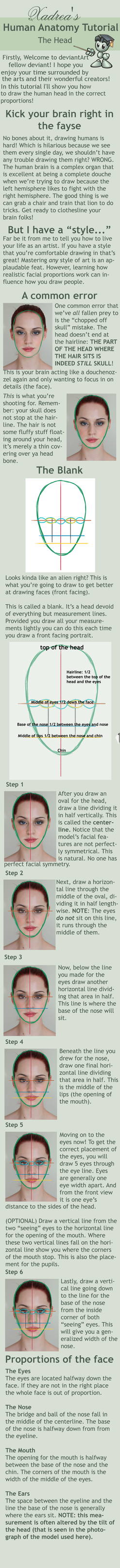 Human Anatomy Tutorial: The Head by Xadrea on DeviantArt