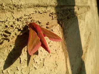 Red Moth by ChildOfMorpheus