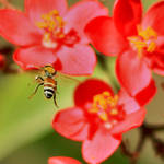 Red flower l bee by DasfnBa