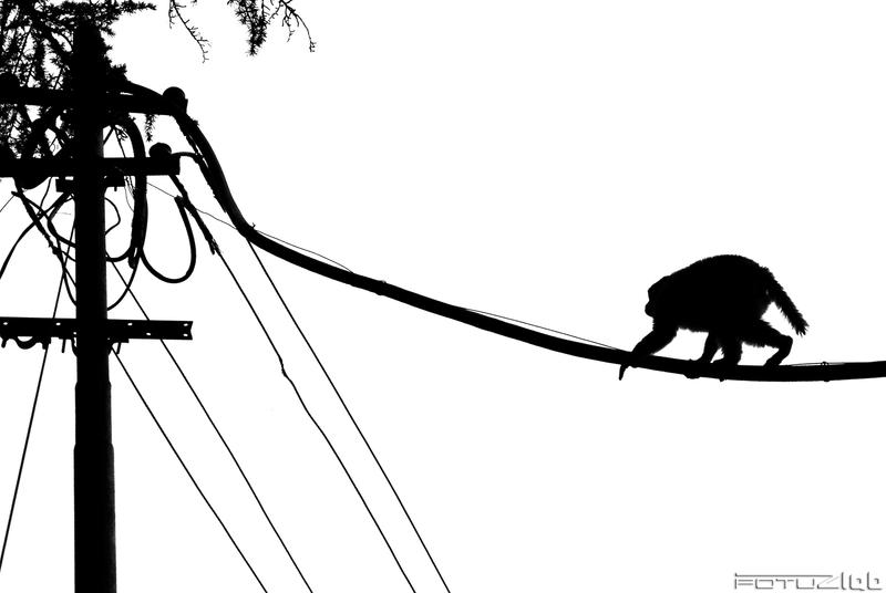 monkey on the move by fotuzlab