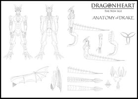 Drake Anatomy Lineart by Vakama3