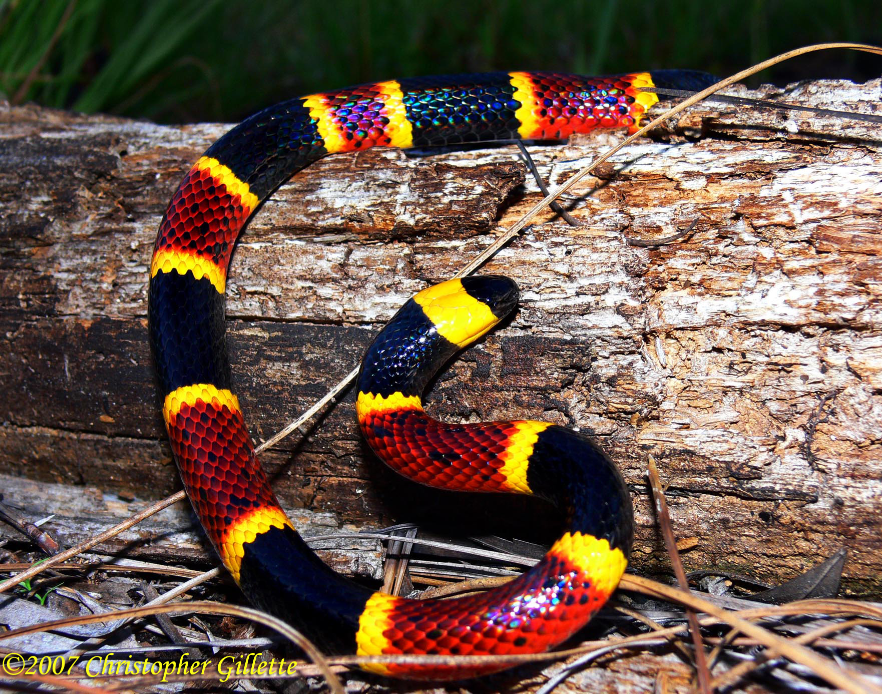 the biochemistry of snake venom essay Free essay: snake bites bob was walking in the woods one day when his life was  put in  their venom mostly affects the circulatory system, but it also causes.