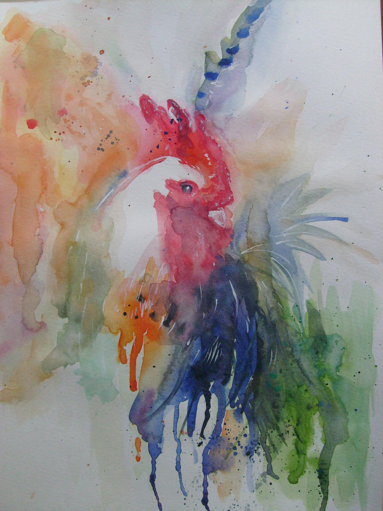 gallo by fendecchia