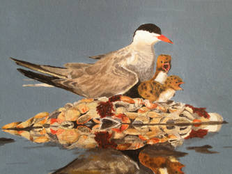 Common Tern by Twiggles13