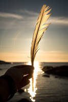 Feather by MarcoK74