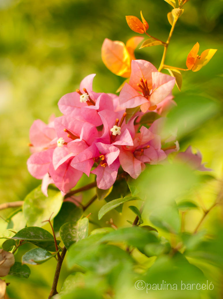 Another one of many by Hyb666