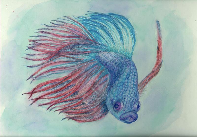 Betta fish by DrackUriel on DeviantArt Betta Fish Drawings