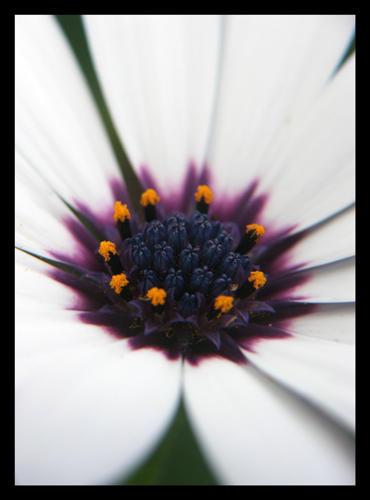 nature_II by eyeronik