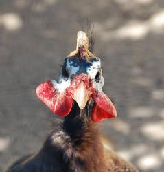 turkey by odinemb