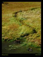 Moose Pool I