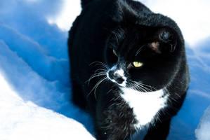 CAT by Lasqueti-Ronnie