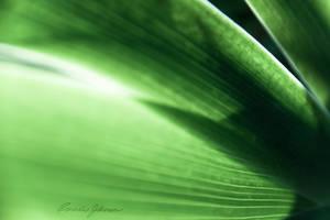 through iris leafs by Lasqueti-Ronnie
