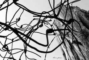 Twisted by Lasqueti-Ronnie