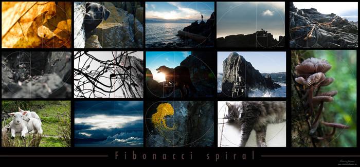 Fibonacci Spirals by Lasqueti-Ronnie