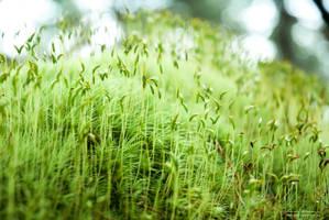 modern moss by Lasqueti-Ronnie