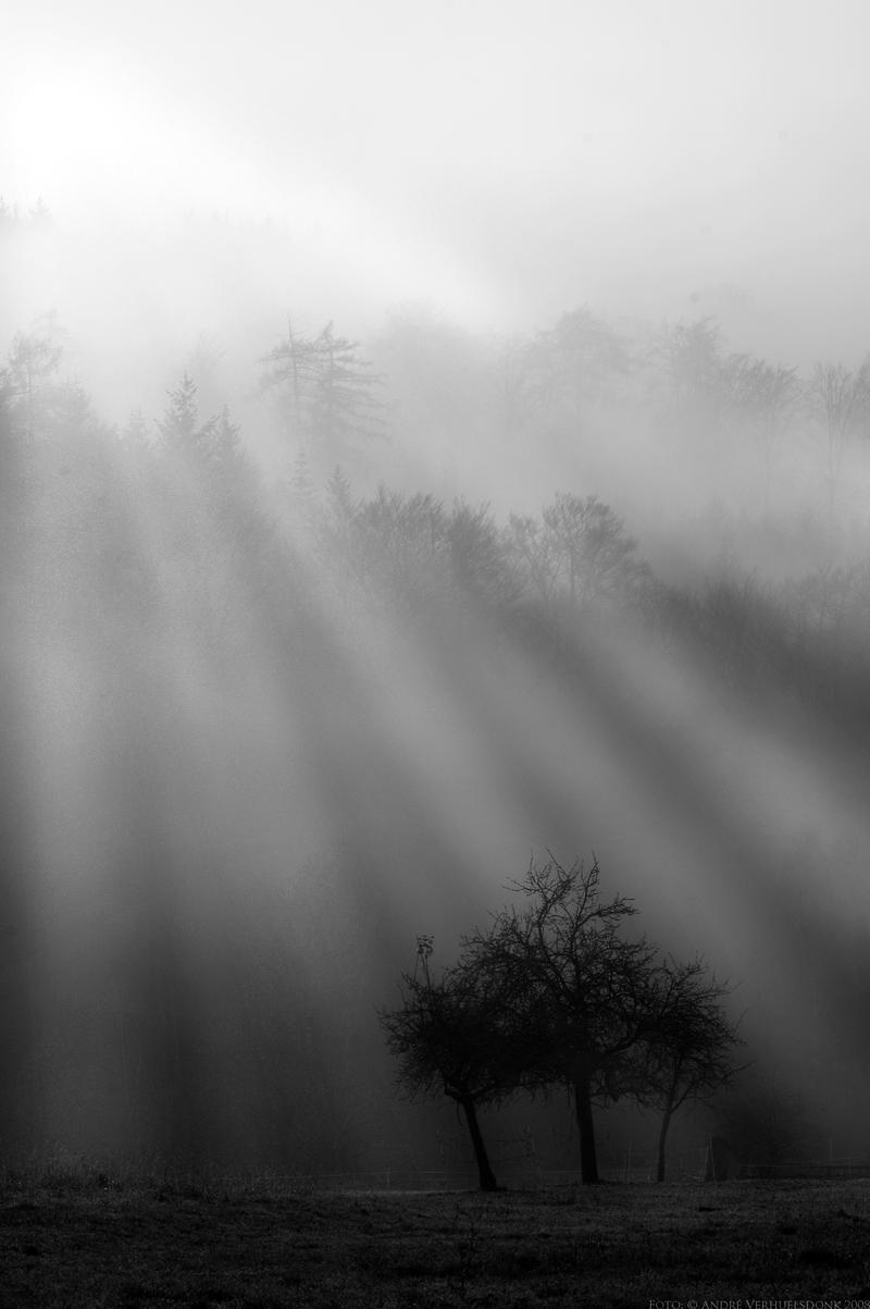 morning fog by donk00085