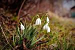 spring by czarnemleko